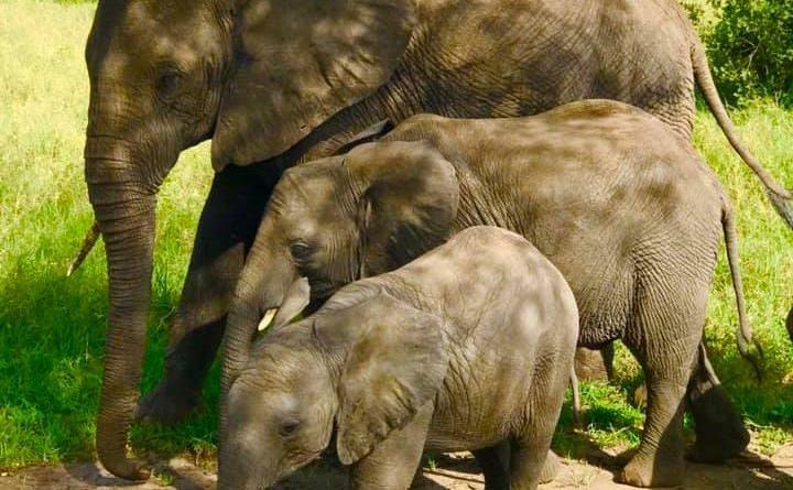 Сафари в Танзании: послеполуденный отдых фауны