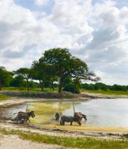 На сафари в Танзании