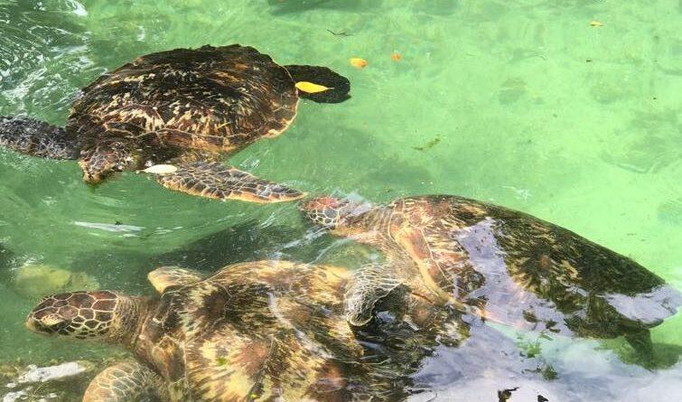Пляжный Занзибар — архипелаг Relax