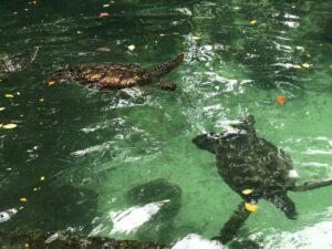 Черепахи Занзибар